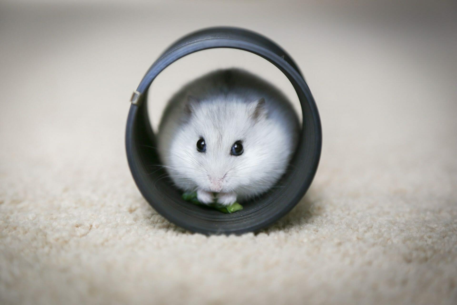 3 steps to leave the never-ending task list hamsterwheel